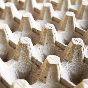 Hueveras de cartón para cría de grillos y gusanos
