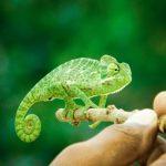 Insectalia Alimento Vivo Nuestro Objetivo