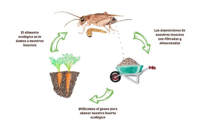 insectalia objetivo cadena d e producción