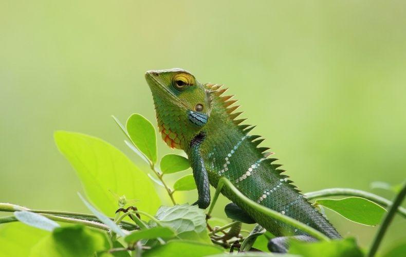 Servicios Insectalia Asesoramiento para la cría de insectos vivos para tu mascota